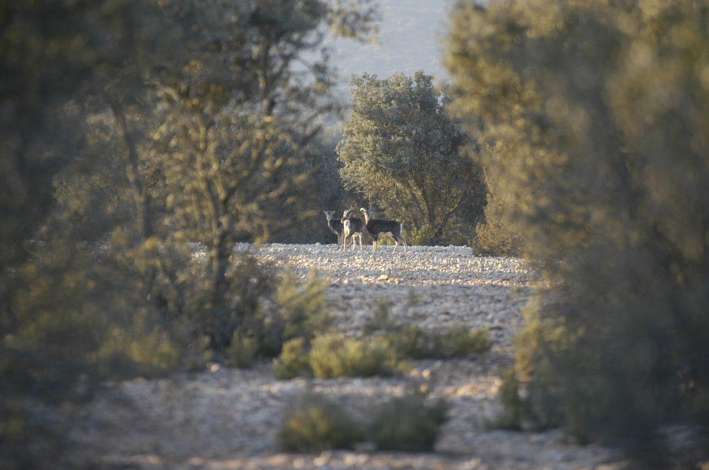 La Dehesa de Navamarin en la provincia de Albacete. Aceite, vino y azafrán.