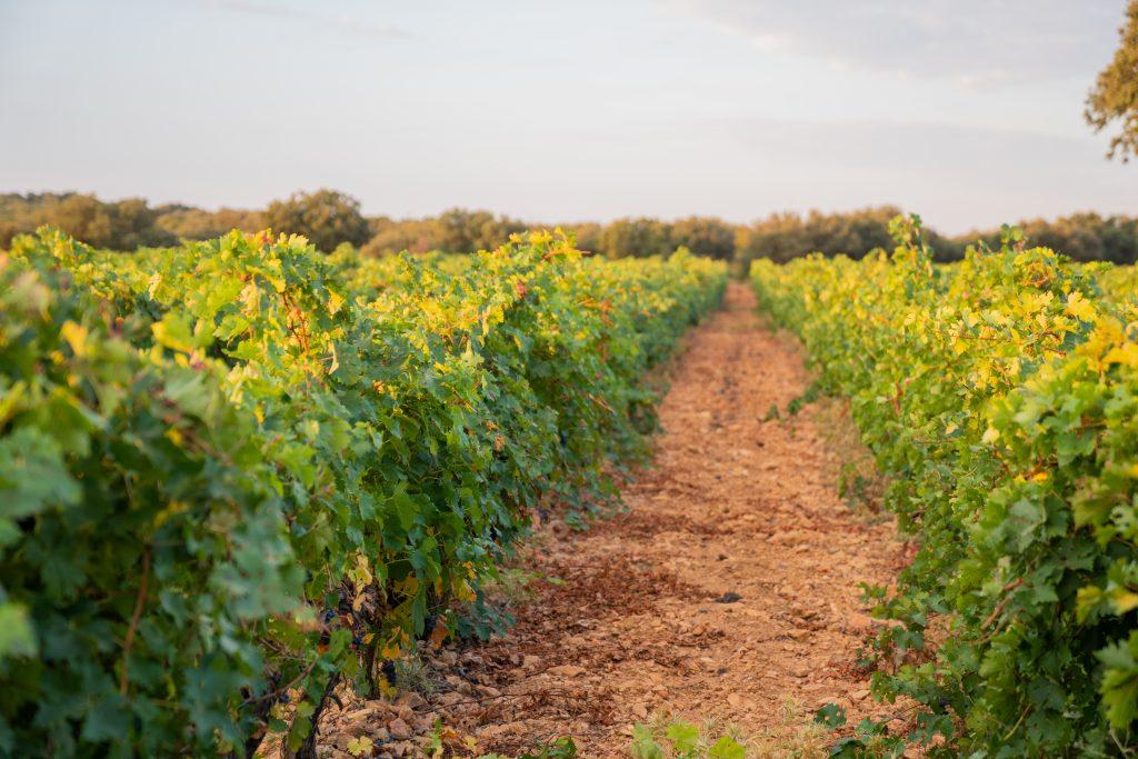 Dehesas y Viñedos de Navamarín