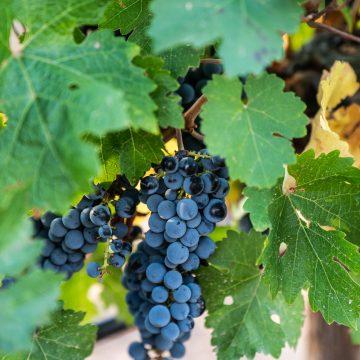 aldonza vinos claves