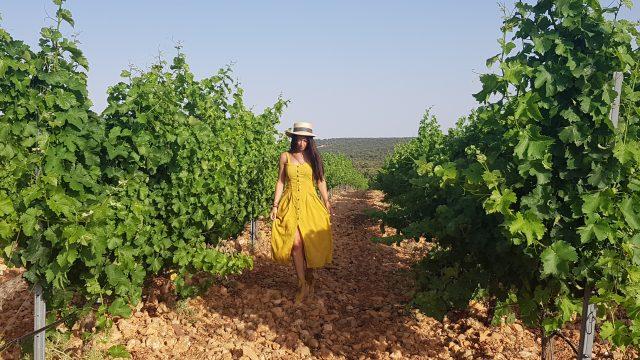 Pasear por los viñedos en una gran experiencia que te ofrece Aldonza Gourmet