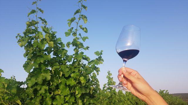 Una copa de vino también puede disfrutarse en los viñedos
